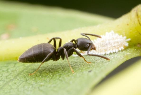 ant pest control service Manchester