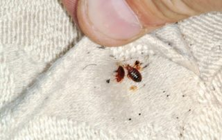 bed bugs pest control services, manchester