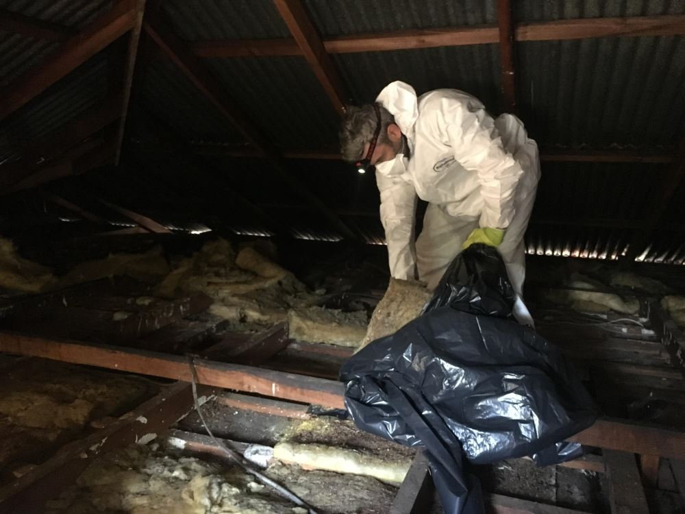 bird control picture - pest control services, manchester
