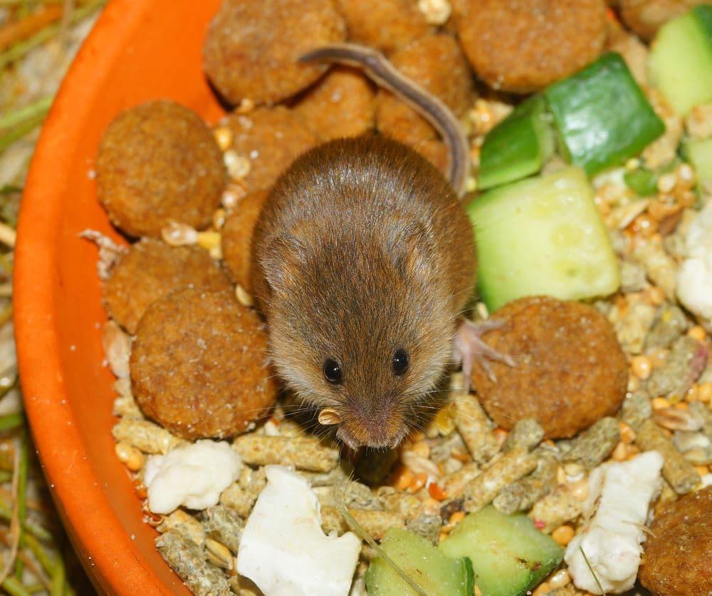 Mouse Control Manchester Exterminators