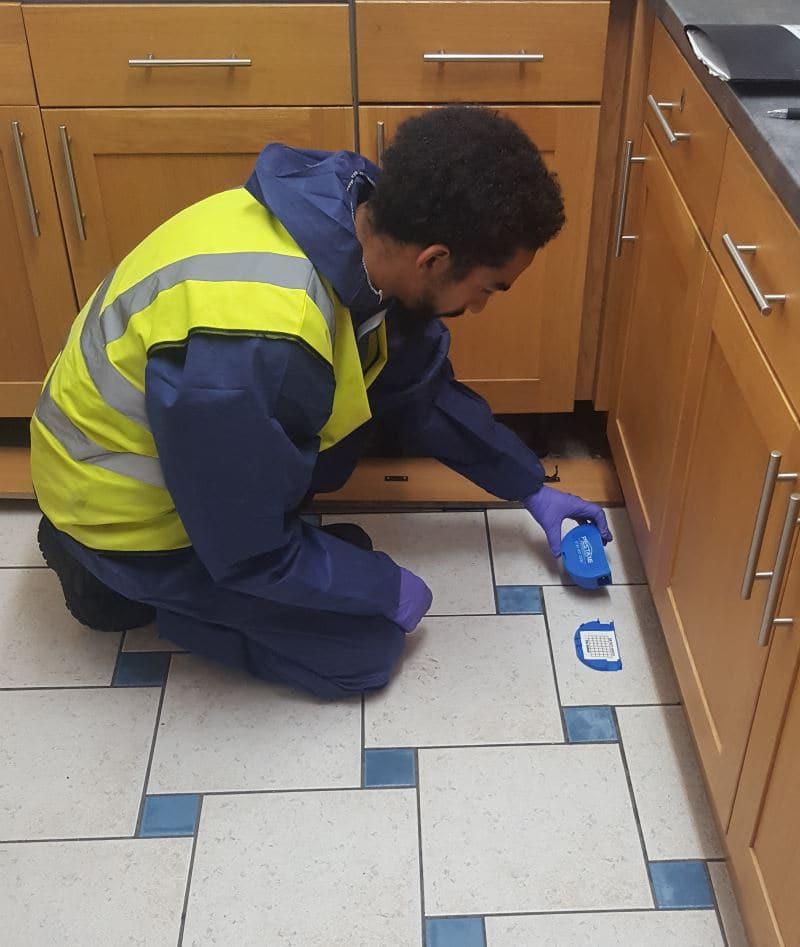 Mouse pest control services