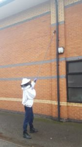 Wasp Nest Removal pest control services